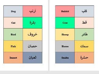 Animals ESOL English Arabic Flashcards