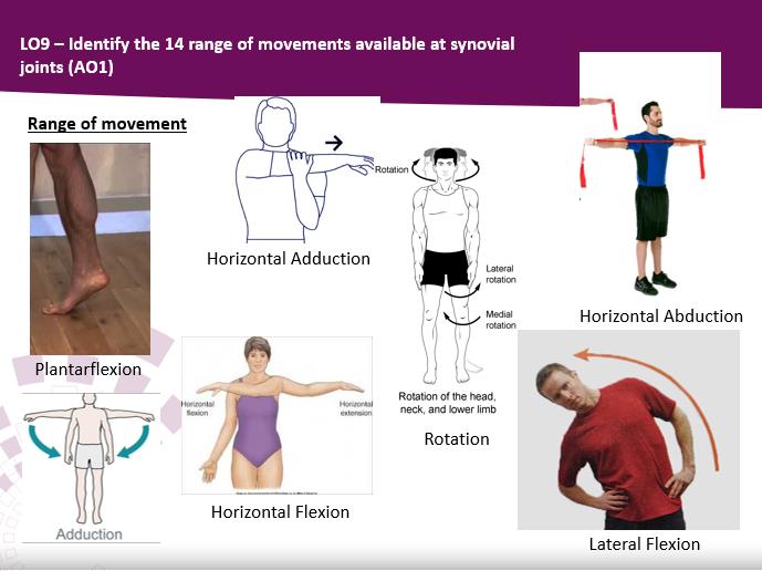 BTEC Sport Level 3 Unit 1 Skeletal System Complete Teaching Pack