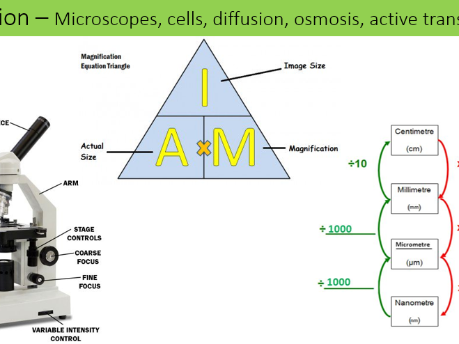 Biology  revision & exam questions (combined science)