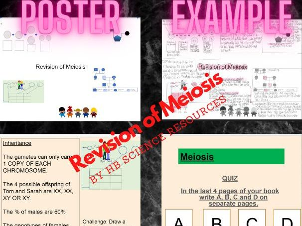 Revision of Meiosis