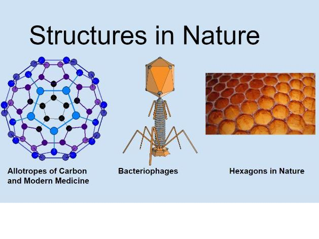 Science Project - Structures in Nature
