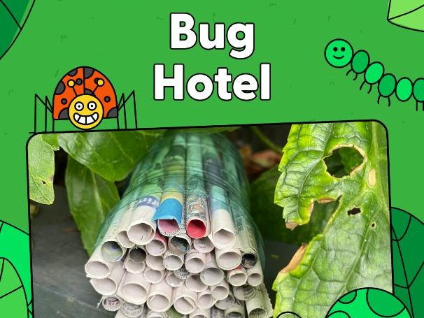 Activity - Bug Hotel