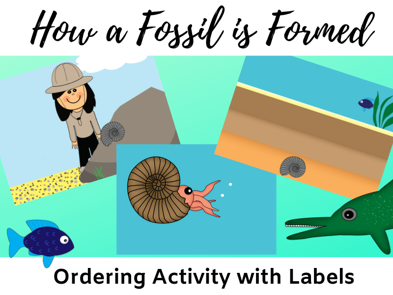 How a fossil is formed sequencing activity KS2