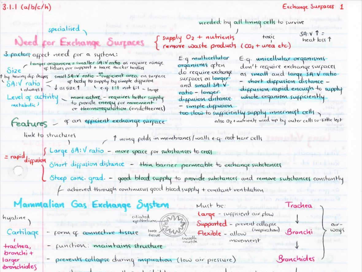 OCR A Level Biology Module 3 Revision Posters