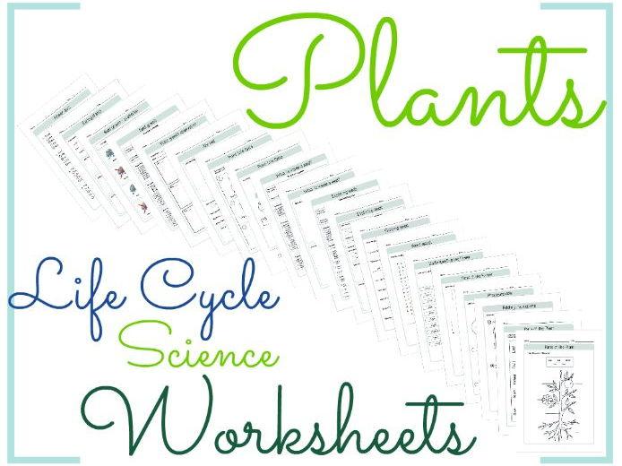 Plants Life Cycle Science Worksheets 11 by BioGeoScience ...