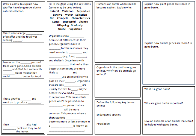 KS3 Biology revision mats
