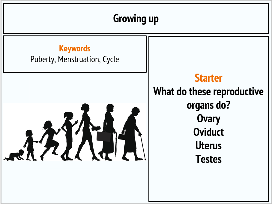 Growing up (Puberty and menstruation)KS3