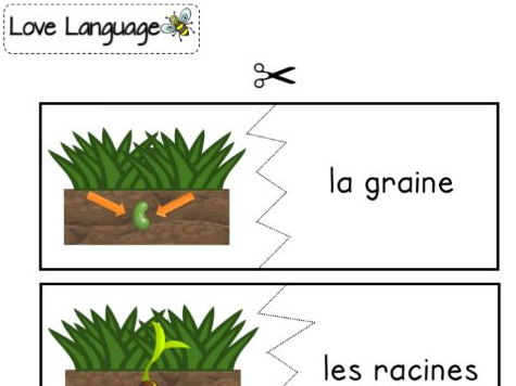 Life cycle of a plant in French - parts of a plant matching