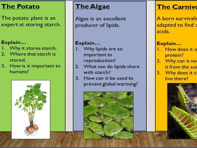 KS4 8.3 how plants use glucose