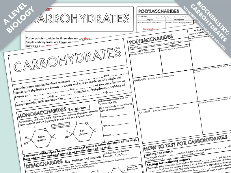 A Level Biology: Carbohydrates Summary Worksheet