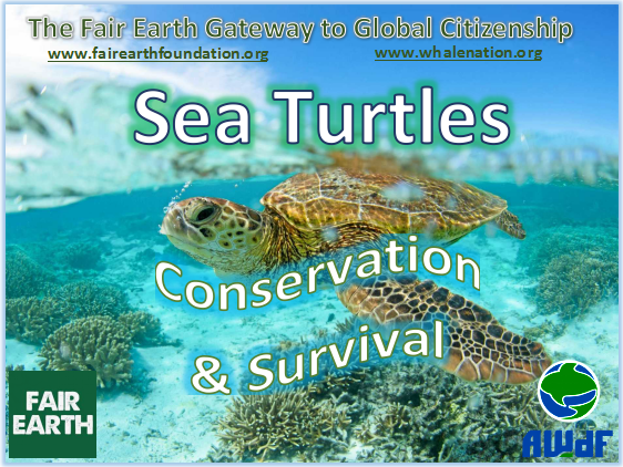 Sea Turtles - Fair Earth Resources