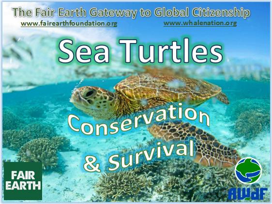 Sea Turtles - Fair Earth Resources