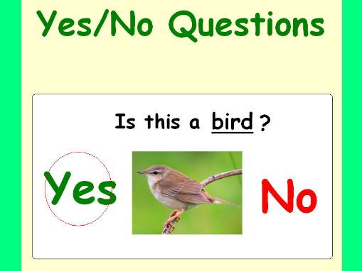 Spring Yes/No Questions for Speech Therapy and Special Ed