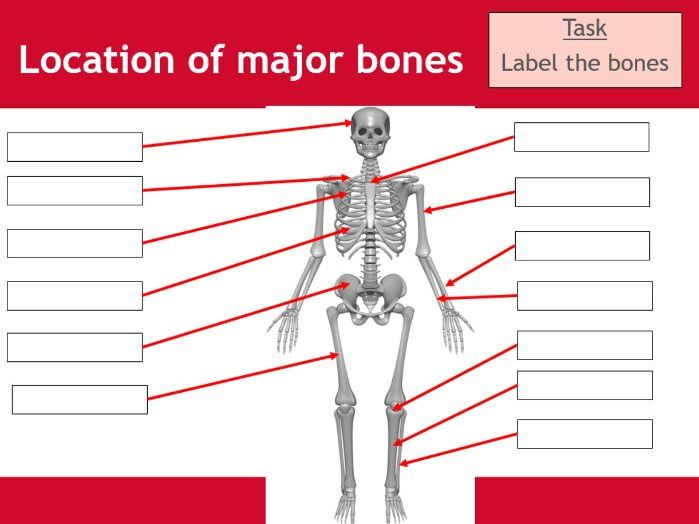 Skeletal system worksheet - BTEC Sport - Unit 3 - Applying the principles of personal training