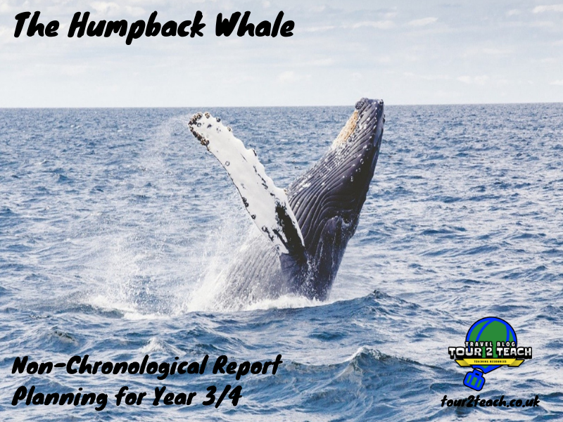 The Humpback Whale: Non-Chronological Report Planning for Year 3/4