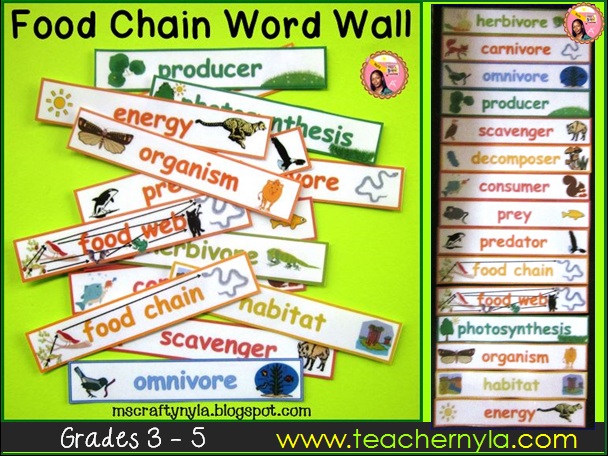 Food Chains and Food Webs - Word Wall