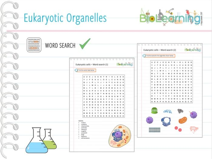Eukaryotic Organelles - Word search (KS5)