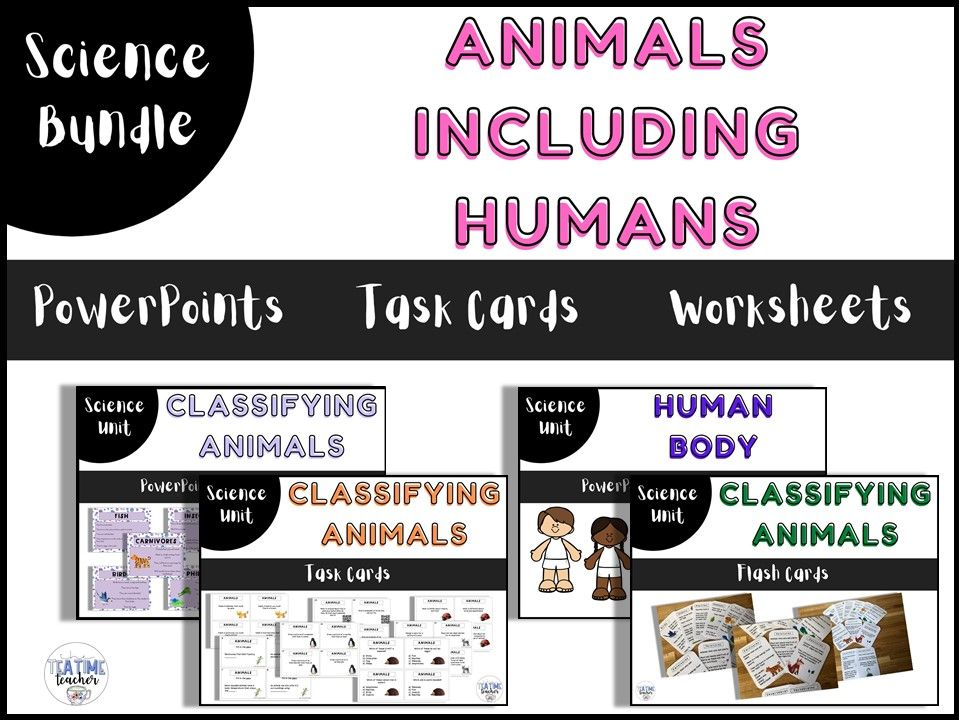 Animals including Humans Year 1 Bundle
