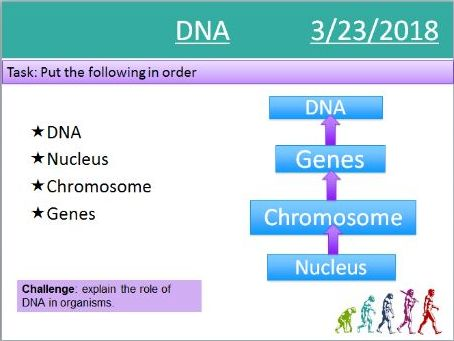 AQA GCSE Biology (Triology) DNA Lessons