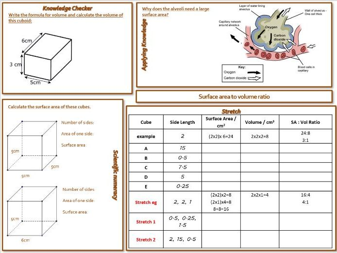 IGCSE Surface area to volume ratio full lesson with worksheets and powerpoint