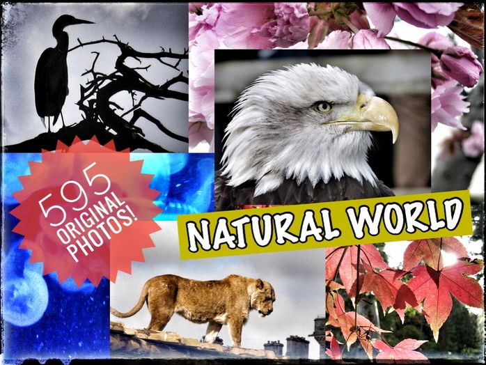 ART. Natural World. 8 Images Slideshows. 595 Original Photos to support observations