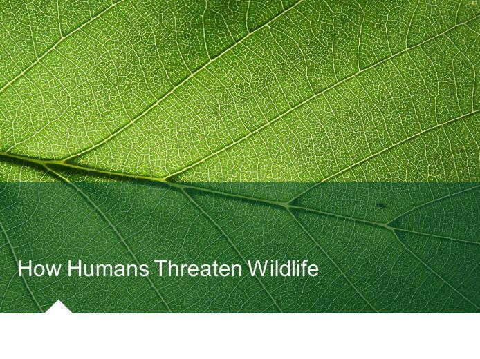 How Humans Threaten Wildlife (Habitat Change/Destruction) Environmental Science/Studies