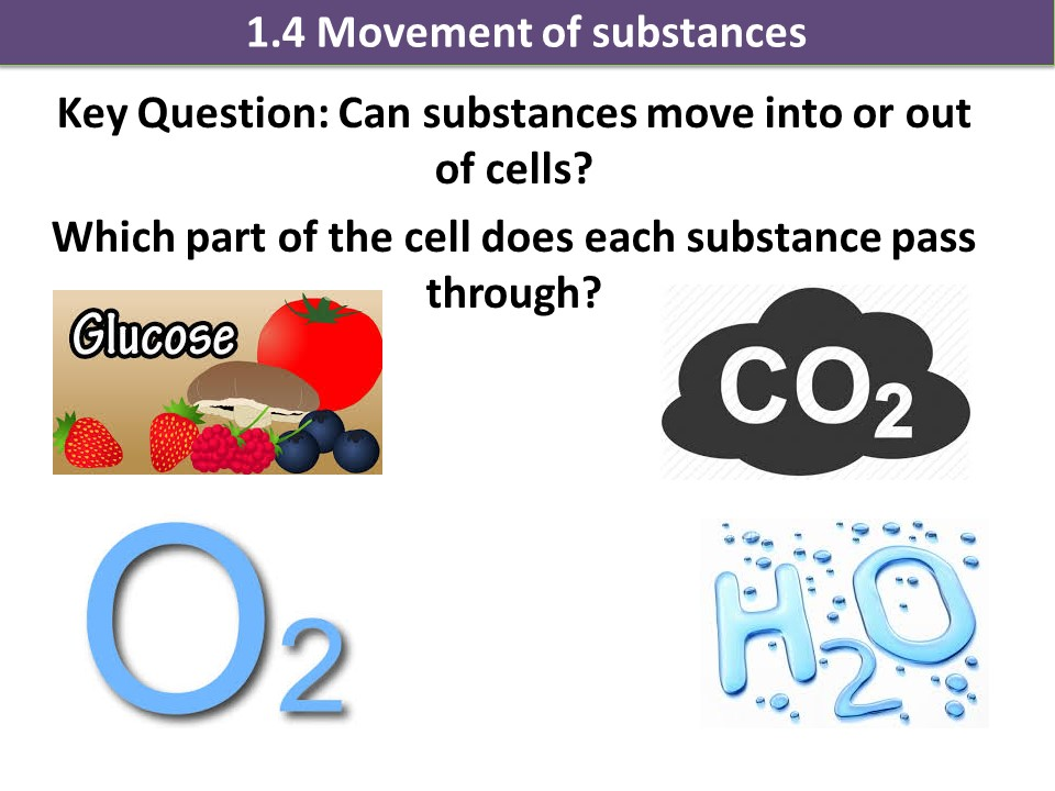 Activate 1 KS3 Biology Cells movement of substances diffusion