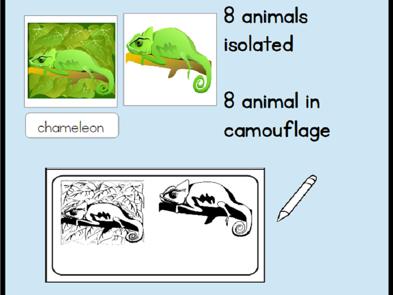 Animal Camouflage Cards