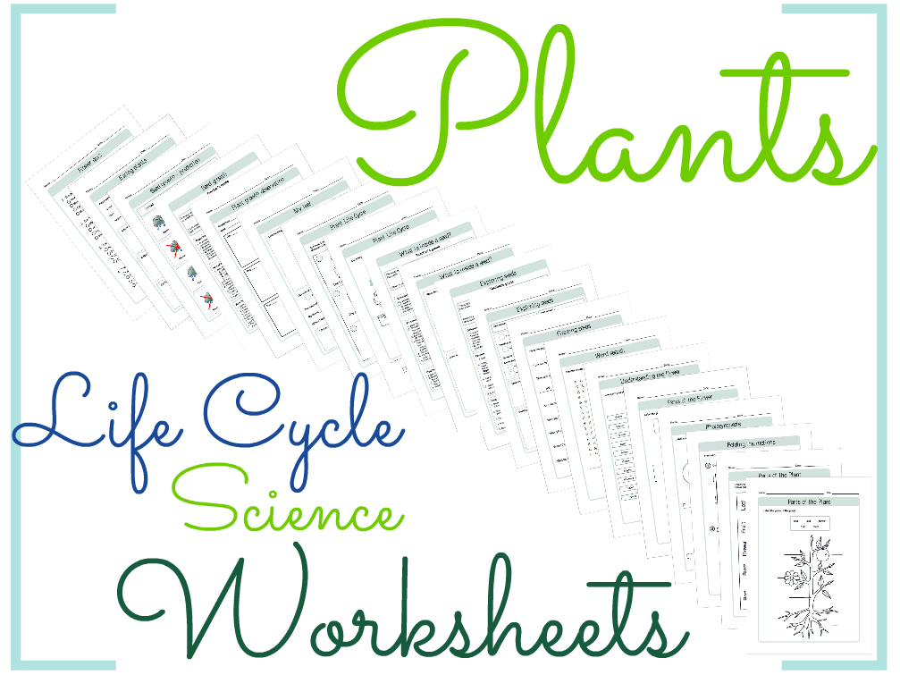 Plants Life Cycle Science Worksheets