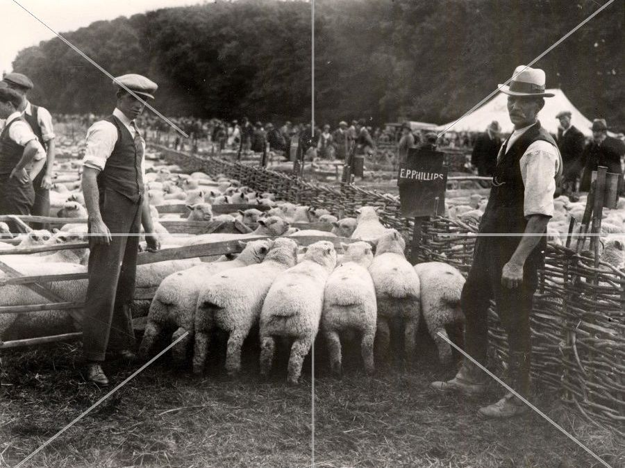 A Sheep Fair by Thomas Hardy- Questions for Analysis