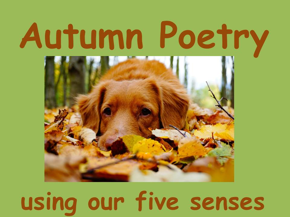 How to Write an Autumn Poem using your Senses KS2 (powerpoint and lesson plan)