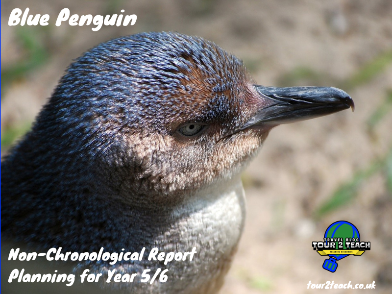 Blue Penguin Non-Chronological Report Planning for Year 5/6