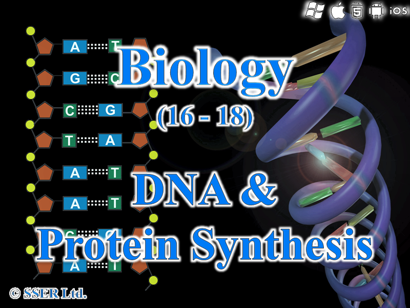 3.4.2 DNA & Protein Synthesis - Transcription & Translation