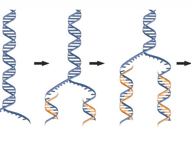DNA replication theories video