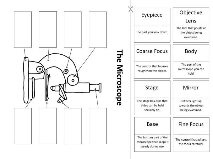 The Microscope: Create a Labelled Diagram