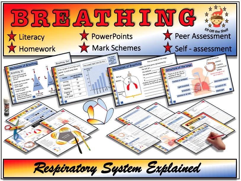 Breathing - Respiratory System Explained  - KS3