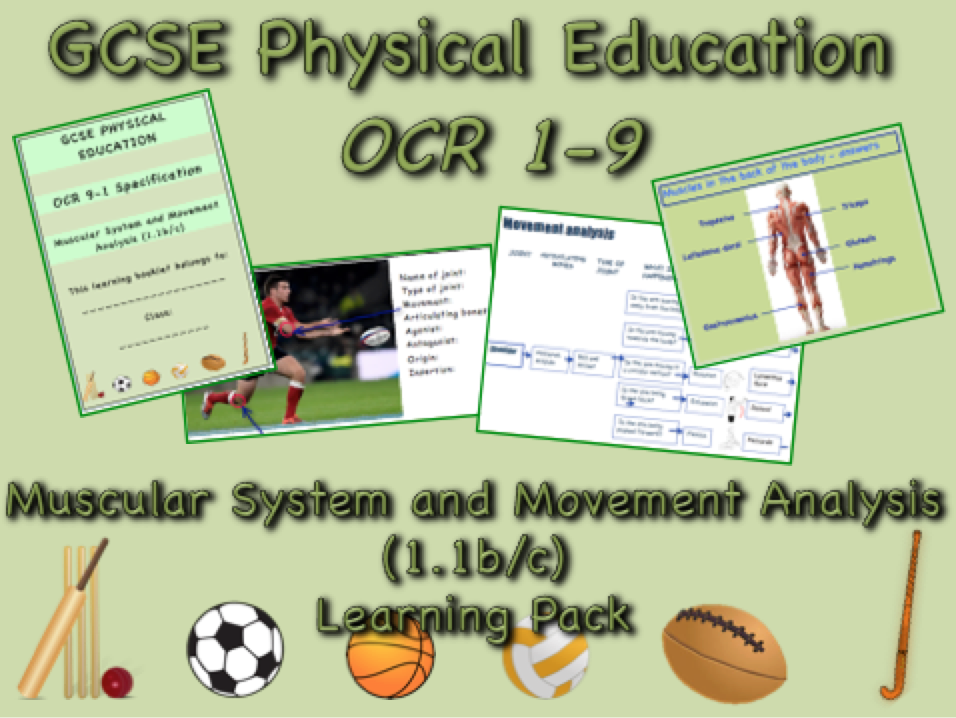 Muscular System and Movement Analysis GCSE OCR PE (1.1b/c) Complete Learning Pack