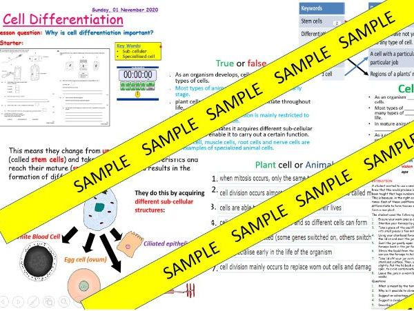 Growth and Differentiation B2.2