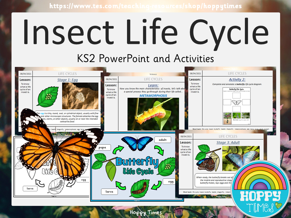 Insect Life Cycle Lesson