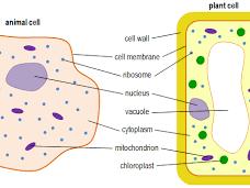 4.1 Cell Biology (GCSE AQA Biology)