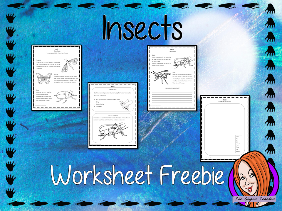Insect  Worksheet Freebie