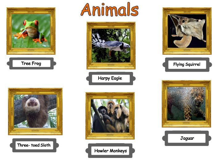 Tropical rainforest animal adaptations lesson & worksheet