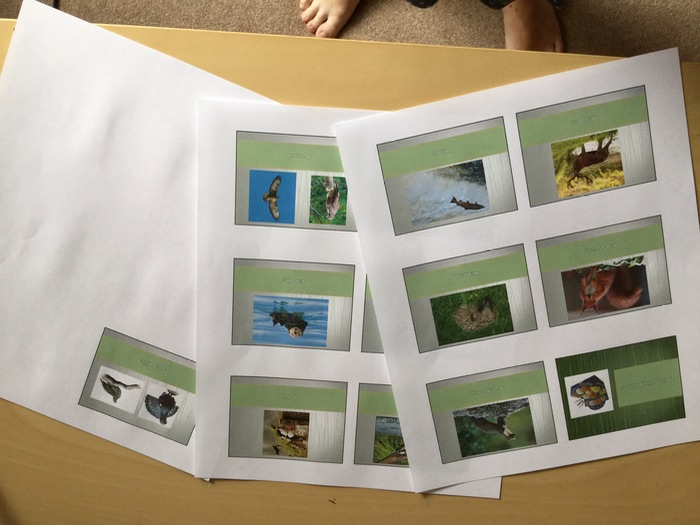 Scottish Wild Animals PowerPoint