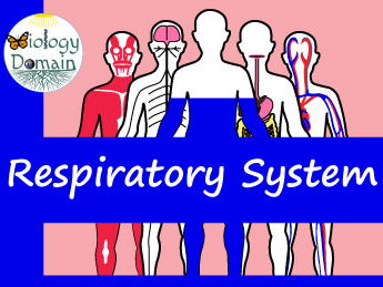 Human Body: Respiratory System Crossword and Word Search
