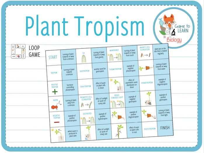 Plant Tropism - Loop Game (KS3/4)