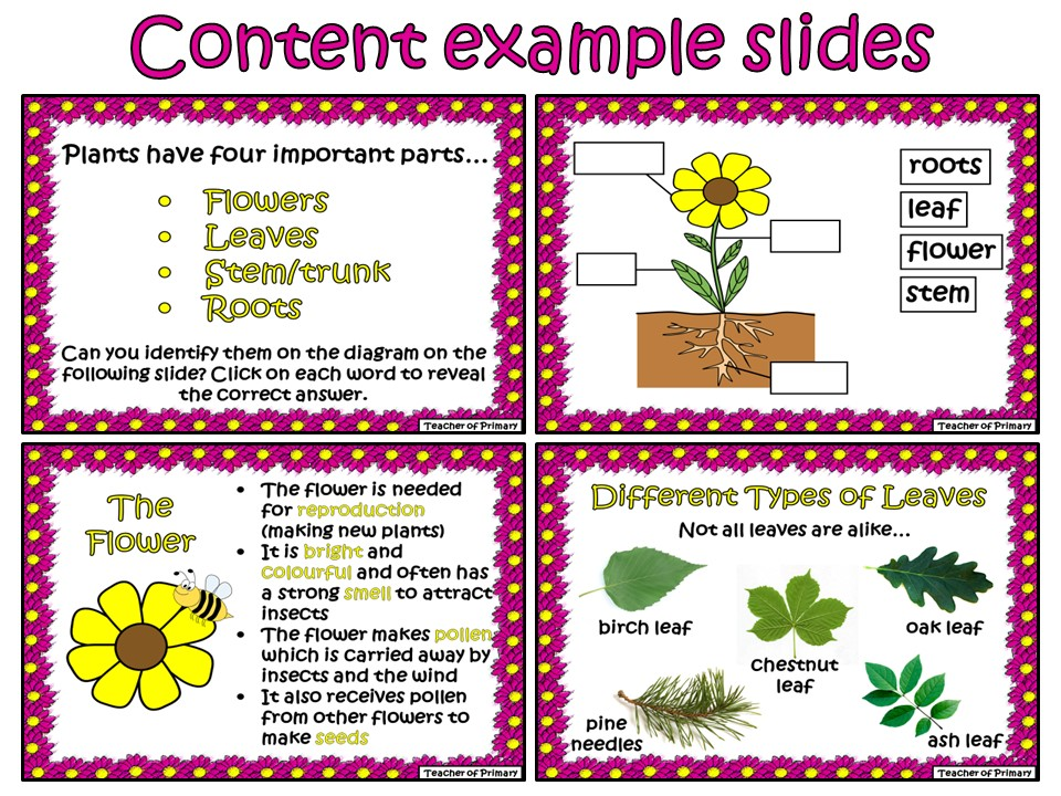 Life Cycle Of A Plant Powerpoint By Elisewilkinson Teaching