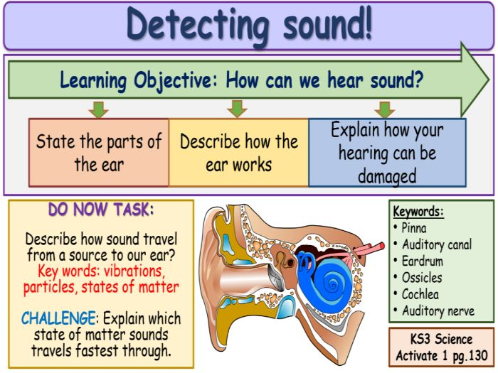 Detecting Sounds KS3 Activate Science