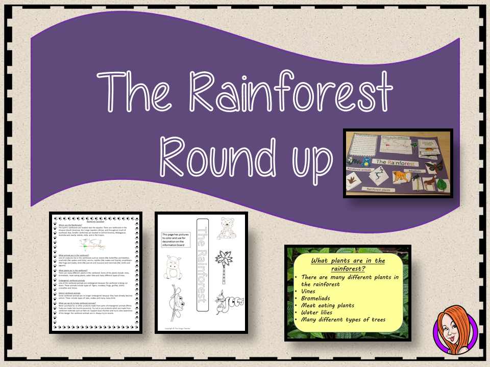 Rainforest Round Up Complete Lesson