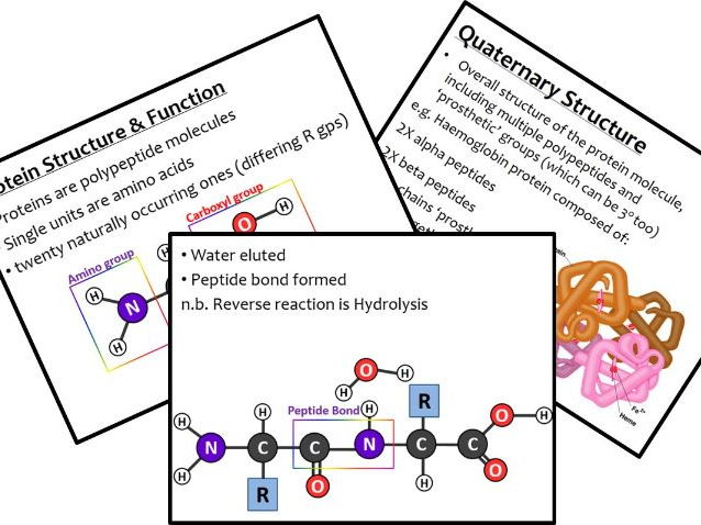 Protein Structure - A Level - Primary to Quaternary - Teacher Presentation and Student CLOZE Handout