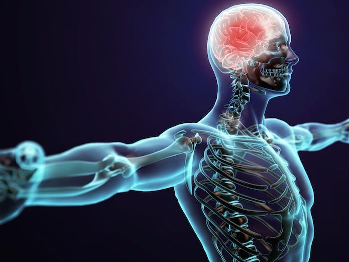 AQA AS Level PE Physical Education Neuromuscular system complete lesson powerpoint